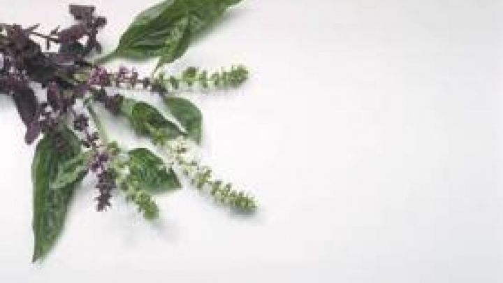 Herb may Help Treat Deadly Brain Cancer | RxWiki