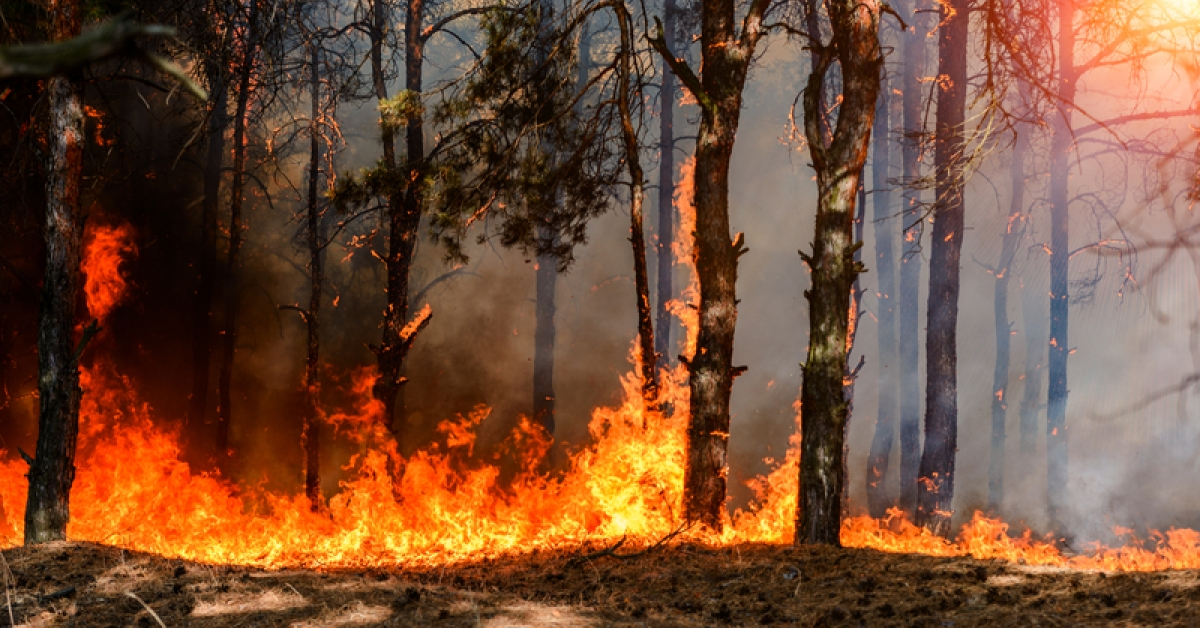 What to Do About Wildfires