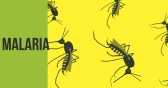 Malaria Rx Gets FDA Nod
