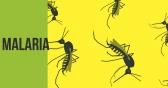 Malaria Rx Gets FDA Nod